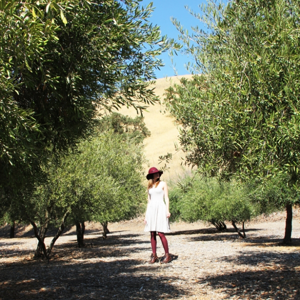 Orchard Long Shot