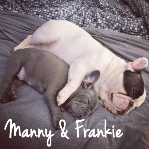 Manny-the-Frenchie